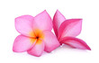 canvas print picture - pink frangipani flower isolated white background