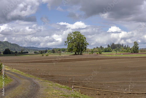 Fotografie, Obraz  Farmland and sprinklers Sauvie Island Oregon.