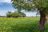 Fototapeta Kwiaty - Wiosna na Podlasiu