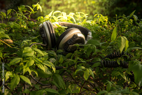 Headphones on the ground, leaves, nature - 204469392