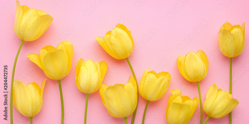 Fototapety, obrazy: Yellow tulip flowers on a pink background, top view, flat layout. concept summer, spring, holiday March 8, mother's day.