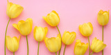Fototapeta Tulipany - Yellow tulip flowers on a pink background, top view, flat layout. concept summer, spring, holiday March 8, mother's day.