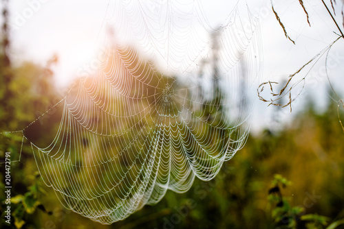 cobweb at dawn and dew on the grass