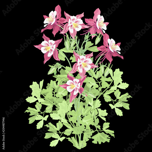 Columbine red flowers (Aquilegia, granny's bonnet) on black background, vector illustration, imitation of watercolor painting Fototapete