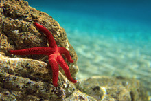 Most Beautiful Mediterranean Red Sea Star Underwater
