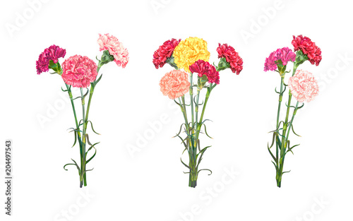 Photo  Set of three bouquets of colorful realistic Carnations isolated on white background