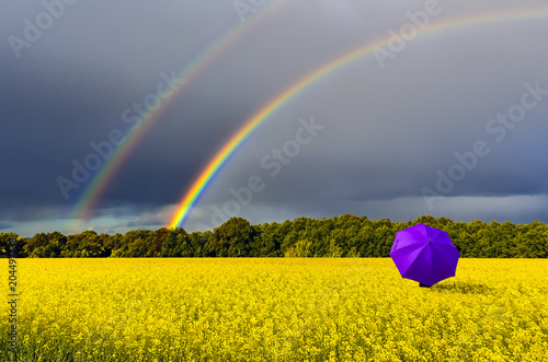 Foto op Aluminium Oranje Lonely umbrella and rainbow above the field with blossoming rapeseed, just before thunderstorm, concept of ecological tourism that is targeted at human health maintenance