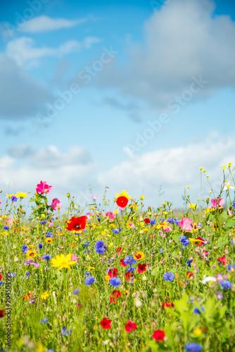 Wild Flower Meadow in Wales Wall mural