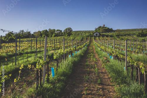 Tuinposter Wijngaard View over vineyards in Nussdorf