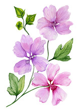 Soft Floral Illustration. Beautiful Purple Lavatera Flowers On A Twig With Green Leaves And Closed Buds Isolated On White Background. Watercolor Painting.