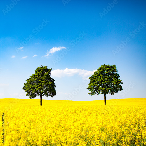 Foto op Canvas Geel Himmel, Raps und Bäume