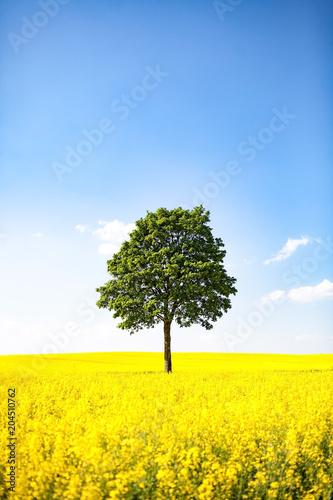 Tuinposter Geel Himmel, Raps und Bäume