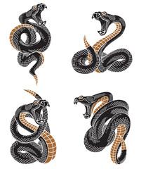Viper zmija set. Ručno nacrtane ilustracije u tehnici graviranja tintom izolirane na pozadini.