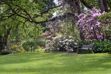 Hendricks Park In The Spring.