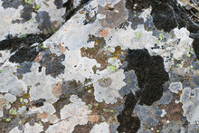 Old Stone Covered With Lichen And Moss. Rock Stone Texture Background.