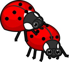 Mating Couple Of Cute Cartoon Ladybirds On White Background