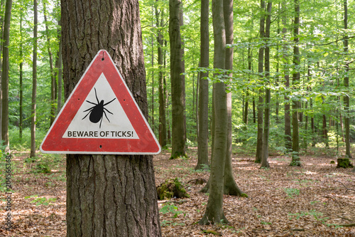 Fotografia  tick insect warning sign in forest