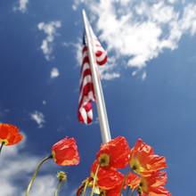 American Flag On Poppy Fields,...