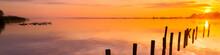 Amazing Golden Sunset With Ducks | Panorama