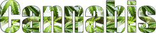Cannabis Logo With Marijuana L...