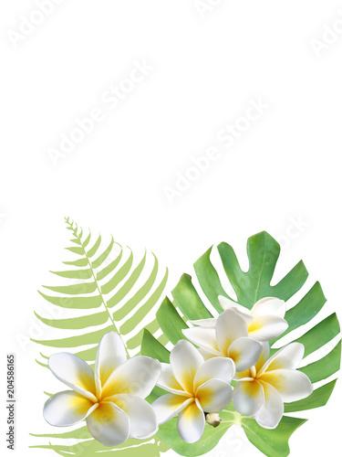 モンステラ プルメリア ハワイ 癒し トロピカル 南国 Adobe Stock でこのストックイラストを購入して 類似のイラストをさらに検索 Adobe Stock