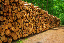 Large Woodpile Of Freshly Cut Logs In A Forest
