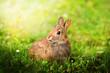 Leinwandbild Motiv coniglietto
