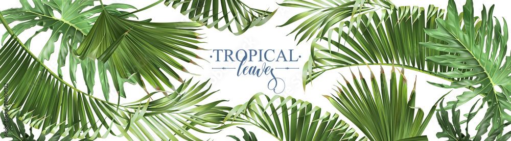 Fototapeta Tropical leaves web banner