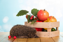 Box Of Vegetables And Fruit, Funny Grey Hedgehog Sitting On Wooden Table