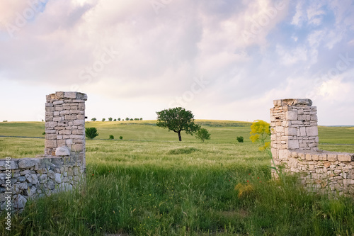 Fotografie, Obraz  Landscape of Apulian countryside in the springtime. Italy.