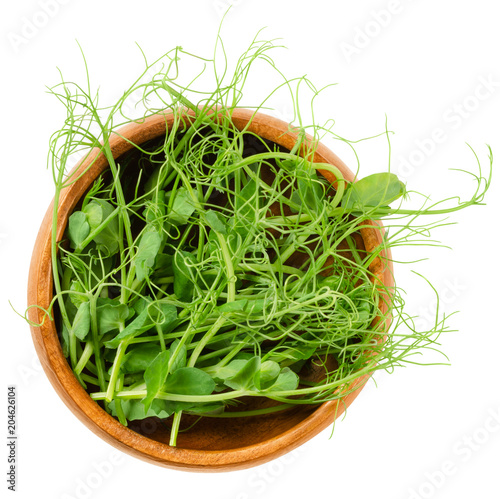 Pea microgreen in wooden bowl. Cotyledons of Pisum sativum. Green shoots, young plants, seedlings and sprouts. Edible, raw, organic and vegan. Isolated macro food photo close up from above over white.