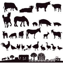 Bauernhof Tiere Und Bauernhof,Illustration.