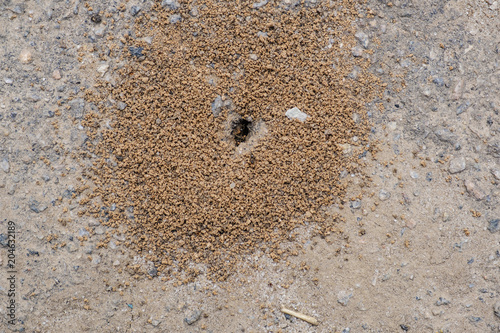 Small anthill in earth. Wallpaper Mural