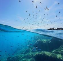 Seabirds (Mediterranean Gulls ...