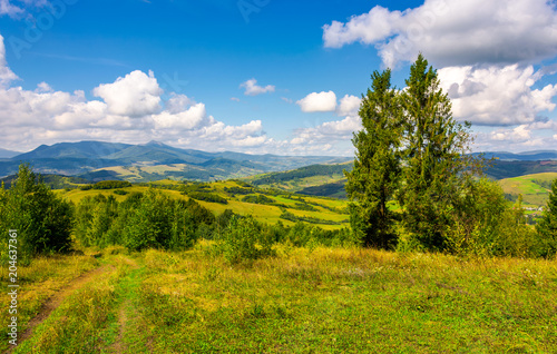 autumnal countryside of Carpathian mountains. country road through grassy meadow, two giant spruce trees and magnificent Pikui peak of Carpathian dividing ridge in the distance under the beautiful sky