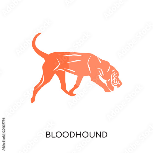 bloodhound logo isolated on white background , colorful vector icon, brand sign Fototapet