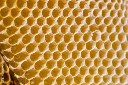 Türaufkleber Makrofotografie Newborn bee on honeycomb