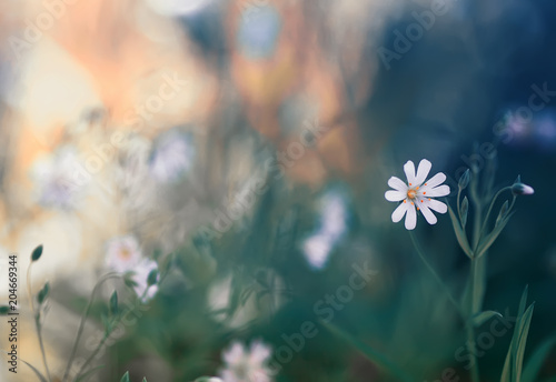 Natural background with small delicate white flowers grow on spring natural background with small delicate white flowers grow on spring forest clearing mightylinksfo