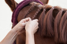 Closeup Of Woman Braid Detail With The Hairs Of The Mane Of A Horse In Riding Club