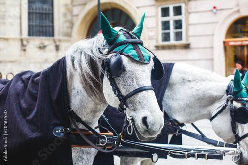 Fotografie, Obraz  Horse-driven carriage wagon at the street in Vienna, Austria