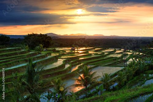 Foto op Aluminium Bali Famous Jatiluwih Rice terraces on Bali during sunrise, Indonesia