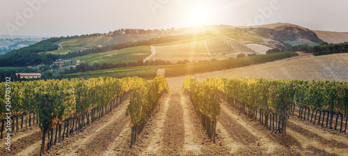 In de dag Toscane Vineyard landscape in Tuscany, Italy.