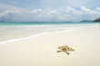 Starfish on beautiful tropical beach background with horizon blue sky and white sand. Summer concept.