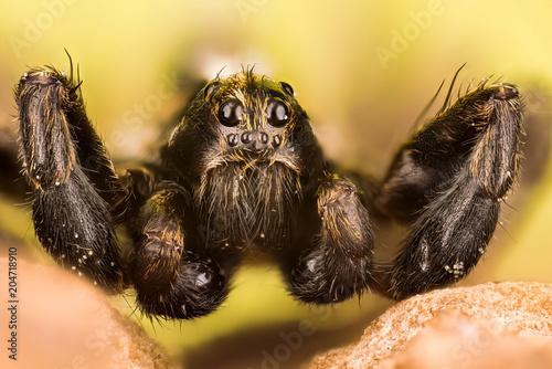 Wolf Spider, Spiders, Pardosa Sp.