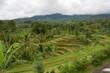 インドネシアバリ島のパチュンのライステラス
