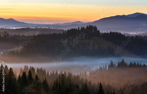 Poster Morning with fog Early morning misty autumn Carpathian mountain, Ukraine.
