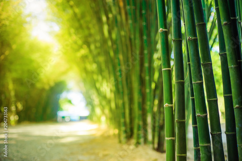 Tuinposter Bamboe bamboo forest with sunlight