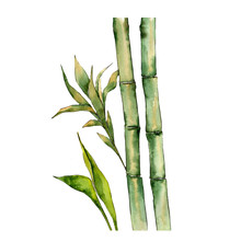 Bamboo Tree In A Watercolor St...