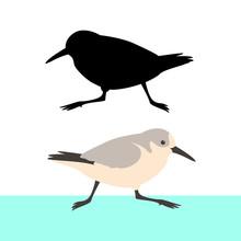 Sandpiper Bird Vector Illustra...