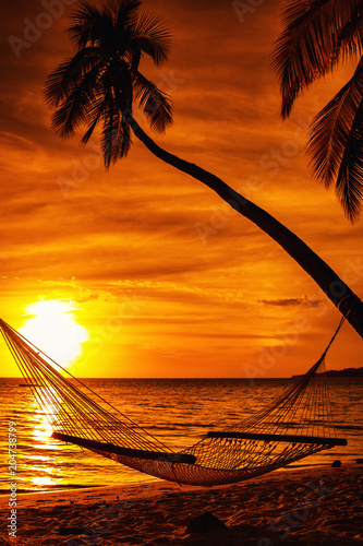 Hammock on a palm tree during beautiful sunset on tropical Fiji Canvas Print